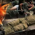 Diserang Rubah, 17 Tentara Israel Luka