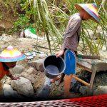 """""""Mendulang"""" Janji Politik di Lahan Pertambangan Emas Desa Saripi"""