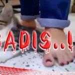 Sadis! Anak Kucing ini Diikat di Leher dan Diinjak-injak oleh 3 Cewek